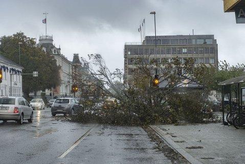 Et tre har veltet over den mest trafikerte gaten i Kristiansand, Vestre Strandgate ved Rutebilstasjonen.