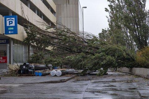 Flere trær har veltet ved Caledonien hotell i Kristiansand. Et tre har også veltet over en leiebil.